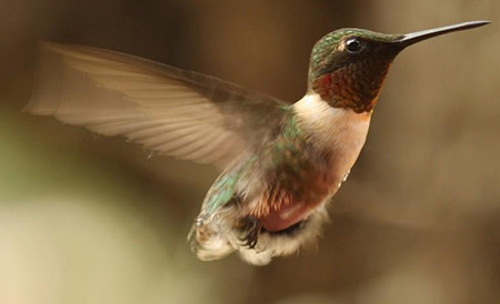 20200311 nature hummingbird