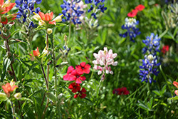 Wildflower Pic CS